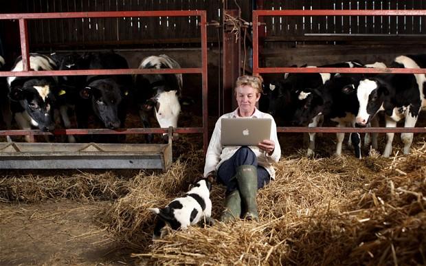 De ce orice afacere din România trebuie să fie prezentă pe internet. Ce ne spun cifrele